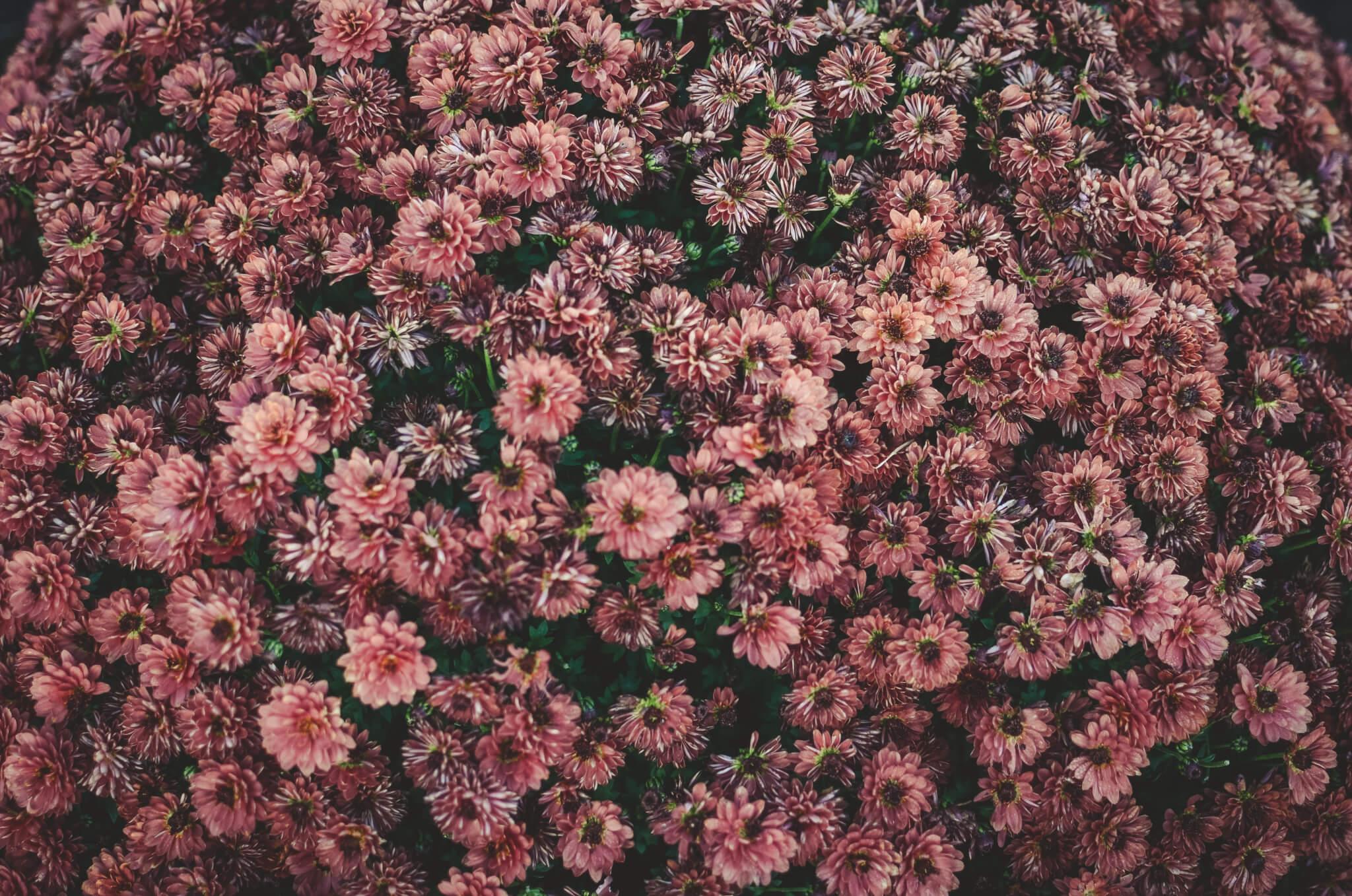 alergias primavera 2018