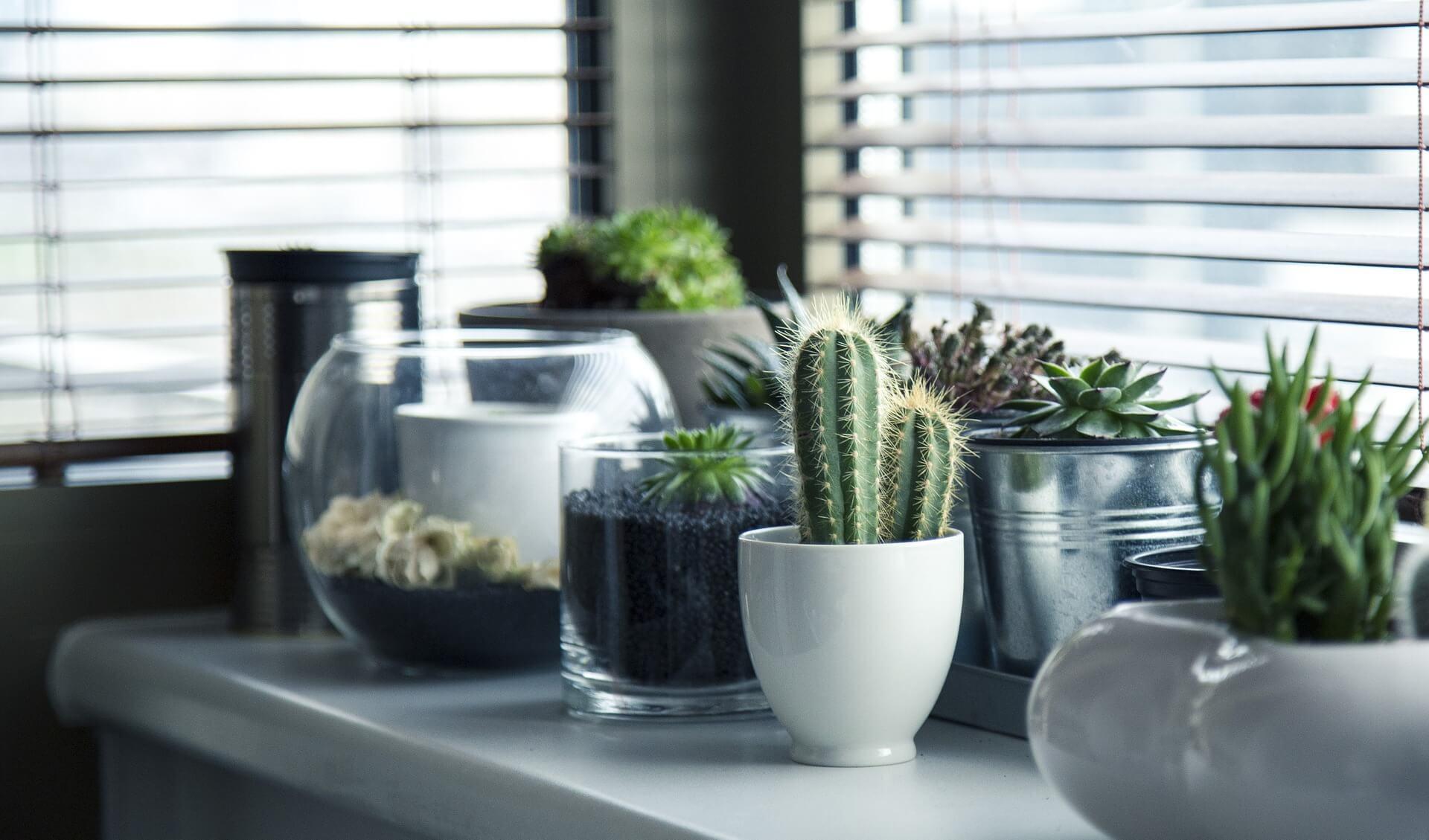 plantas purificar aire hogar