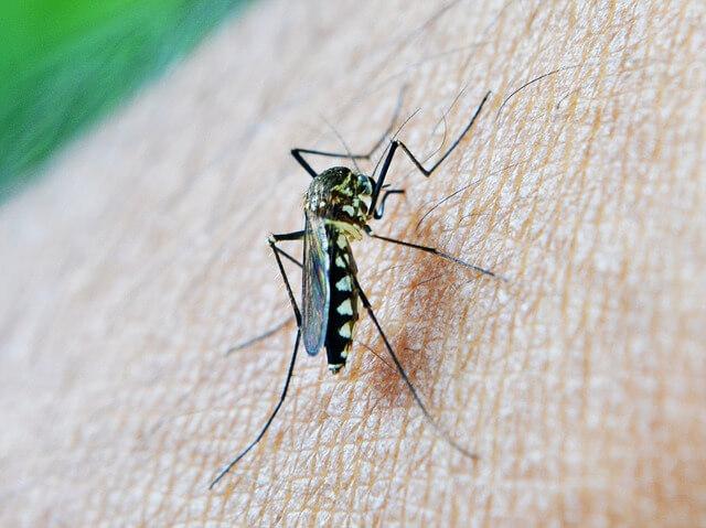 mosquito-tigre-españa