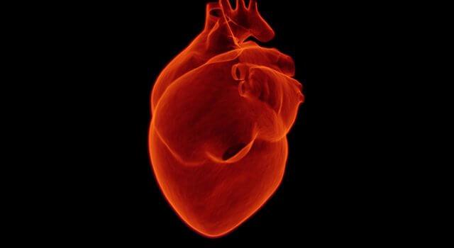 corazon estructura