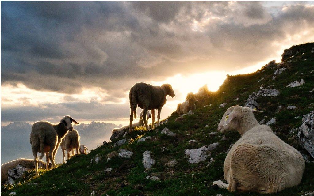 Image result for ovejas en el campo