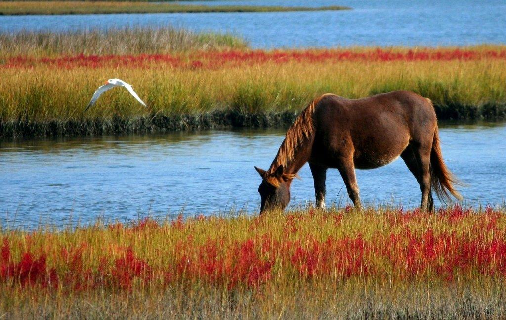 caballo fiebre nilo España