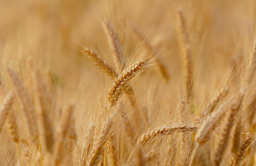 agricultura cambio climático