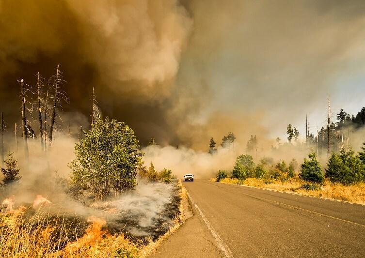 los incendios pasan factura por el cambio climático