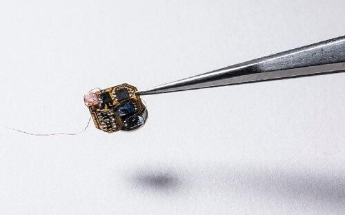 chip bateria abejas con sensor