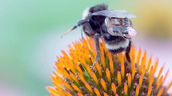mochila abejas con sensores