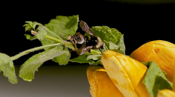 sensores de abejas en forma de mochila