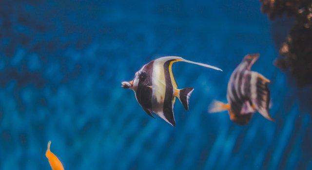olas-de-calor-marinas