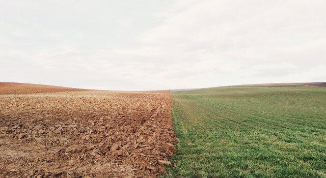 El campo mira al cielo: la cosecha del campo peligra