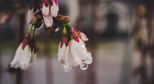 llovera en primavera