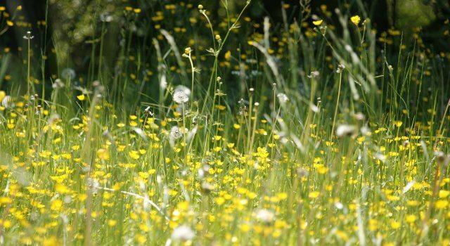 alergia-primavera-sintomas-flores