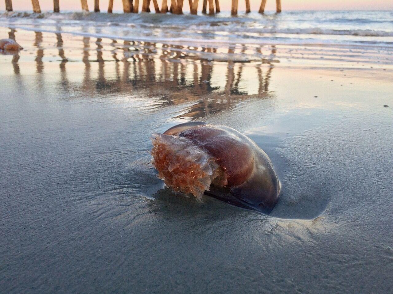 medusa playa litorial