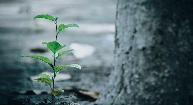 plantar un arbol cambio climatico