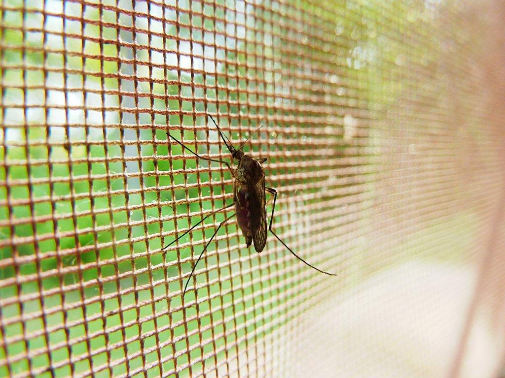 truco-mosquitos-verano