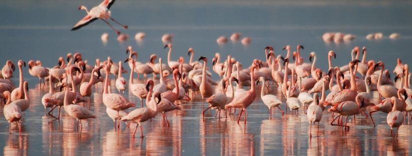 impacto del cambio climatico en aves