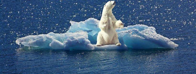 cambio climatico flora y fauna oso polar