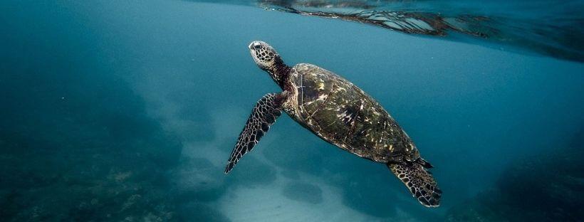 cambio climatico flora y fauna tortuga