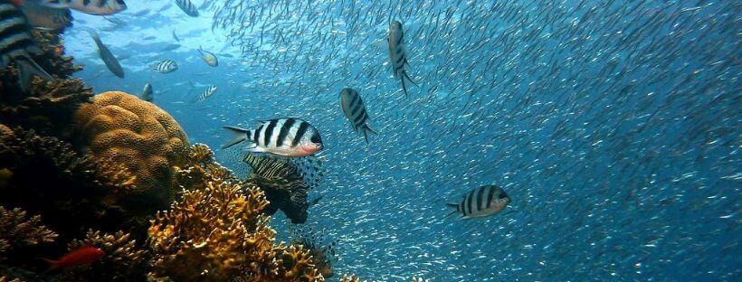 cambio climatico coral