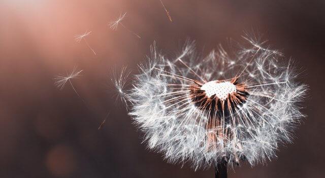 alergia polen junio españa
