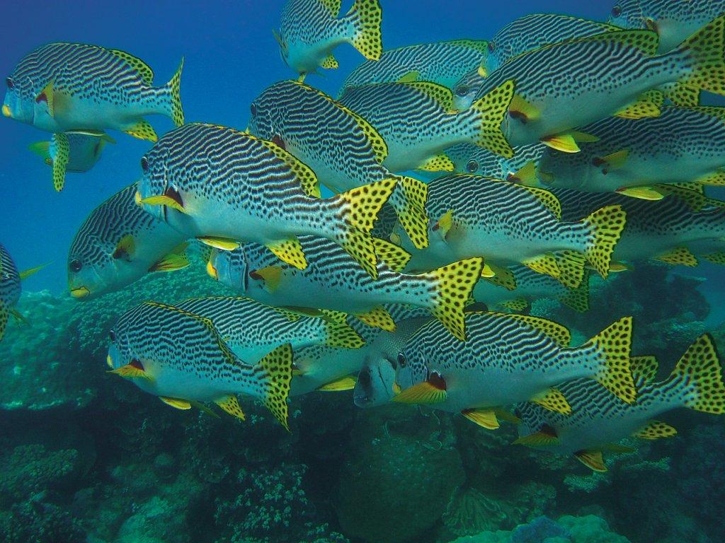 peces de colores snorkel españa