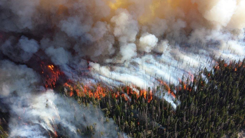 incendios-verano-2019-hectareas-causas