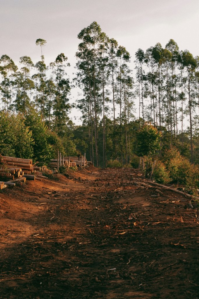 deforestacion arboles cortados