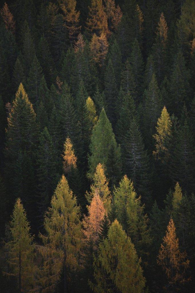 bosque-deforestacion