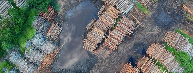 la deforestacion arboles talados