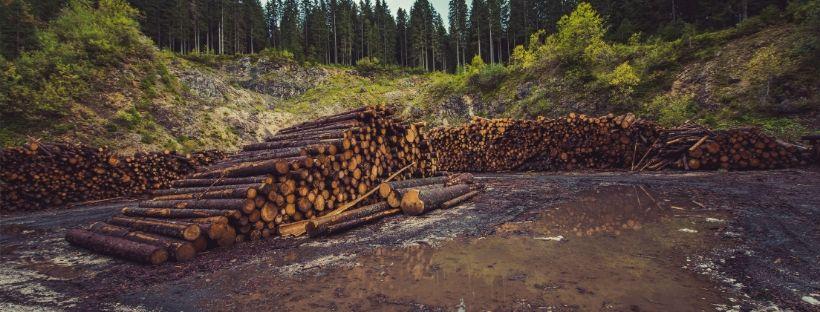 tala de troncos de arboles deforestacion
