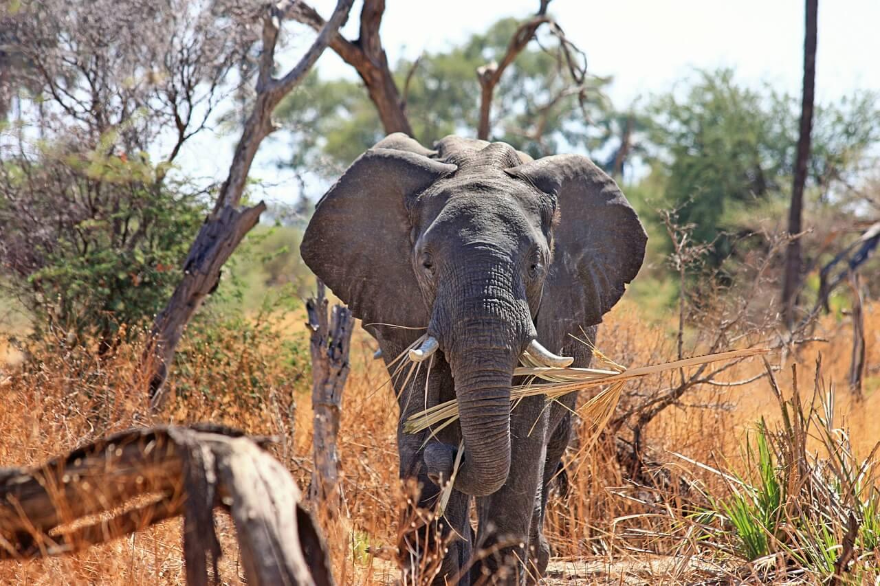 elefante-captura-co2