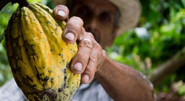 cacao cambio climatico deforestacion