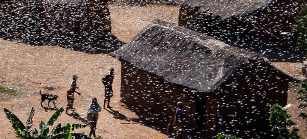 plaga-langostas-africa