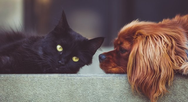 perros-gatos-coronavirus-ciudado