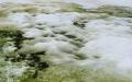 nieve verde antártida artico