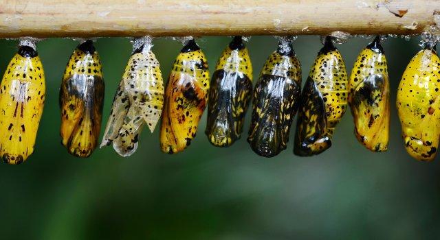 insectos plagas verano 2020