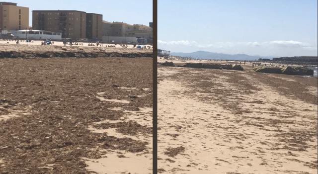 algas mar mediterraneo