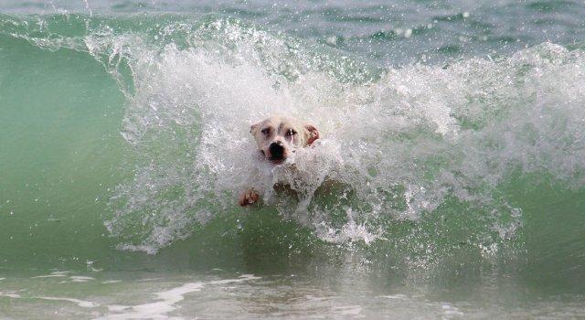 mascotas-perro-agua-mar