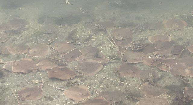 manta-raya-miami-oxigeno-cambio-climativo