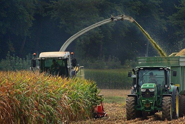 contaminacion-microplasticos-cereales-maiz