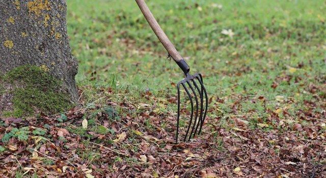 hojas-caidas-otono-rastrillar-ventajas-consejos
