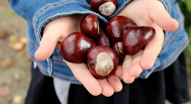 chestnuts-3707981_1280