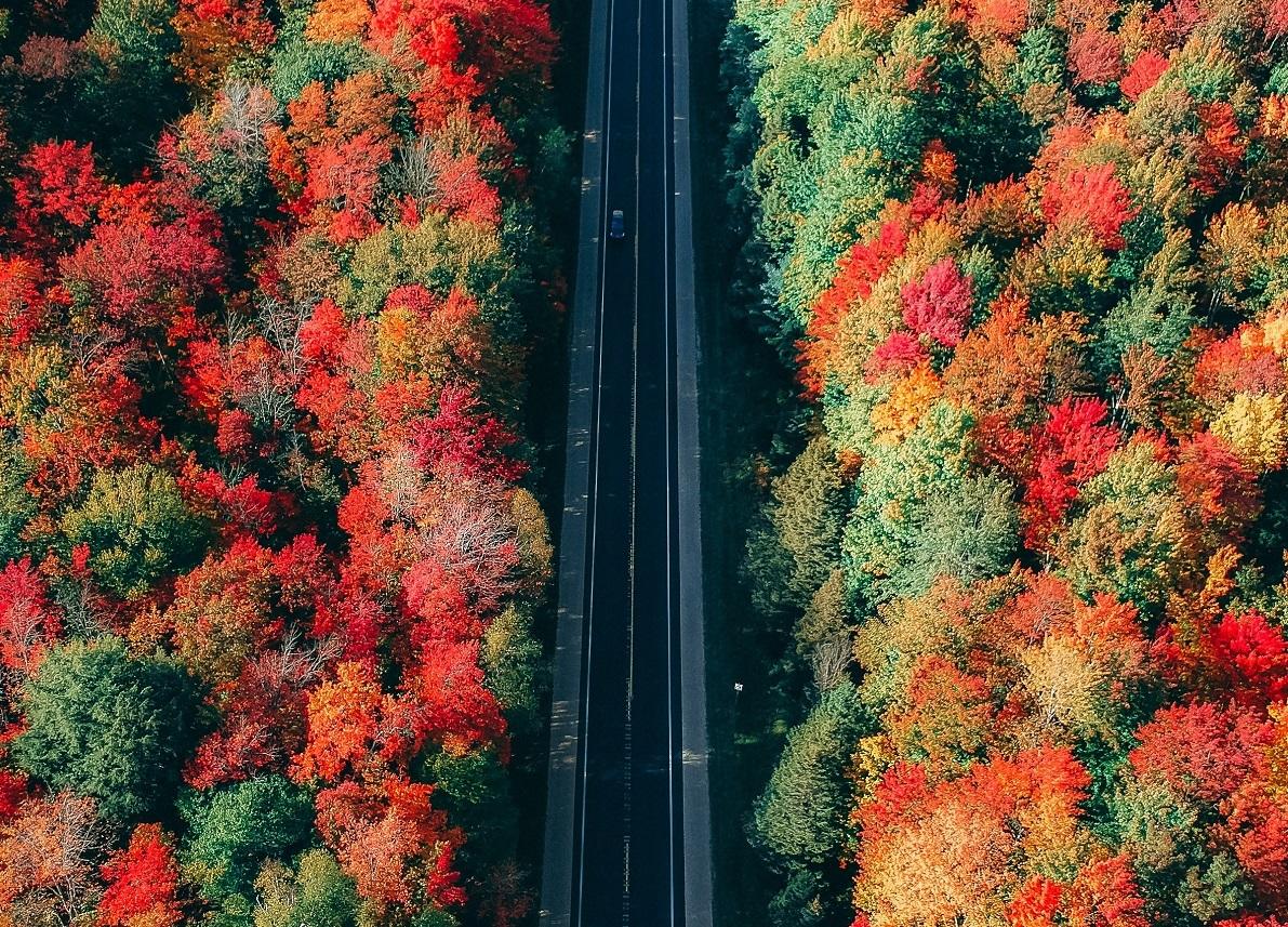 Bosques-otono