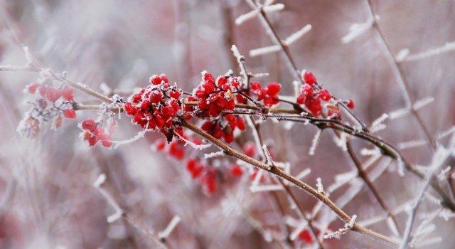 Frío diciembre