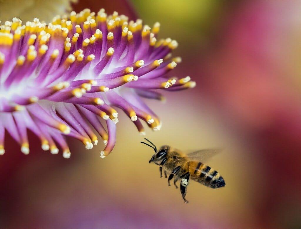mapa-mundo-abejas