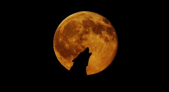 luna llena enero luna del lobo