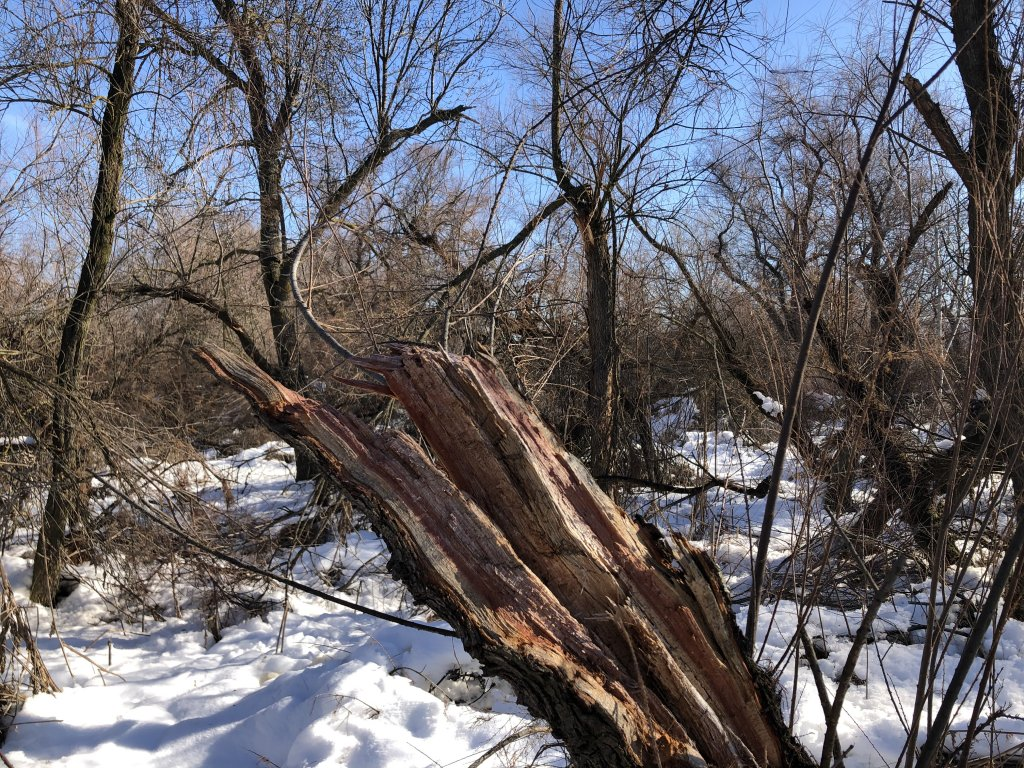 bosques-filomena-daños-incendios (2)