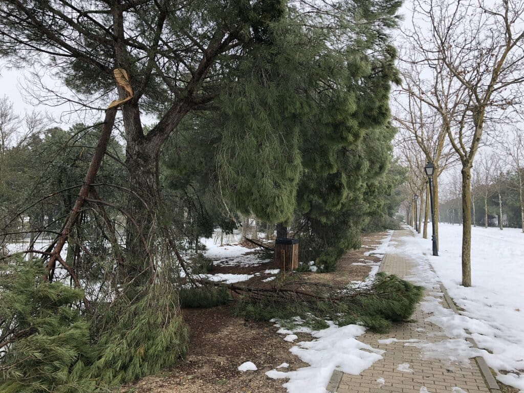 bosques-filomena-daños-incendios (1)