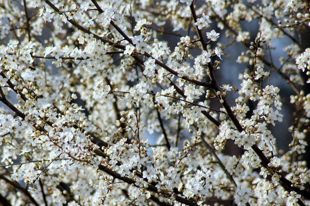 floracion-flores-arboles-primavera-adelanto (1)