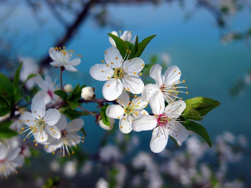 floracion-flores-arboles-primavera-adelanto (2)