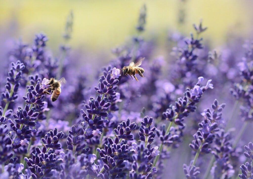 olor-flores-aroma-abejas-1